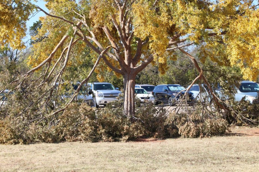 Santa Fe's trees receive damage from ice.